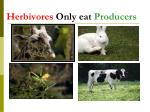 herbivores only eat producers