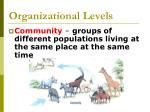 organizational levels4
