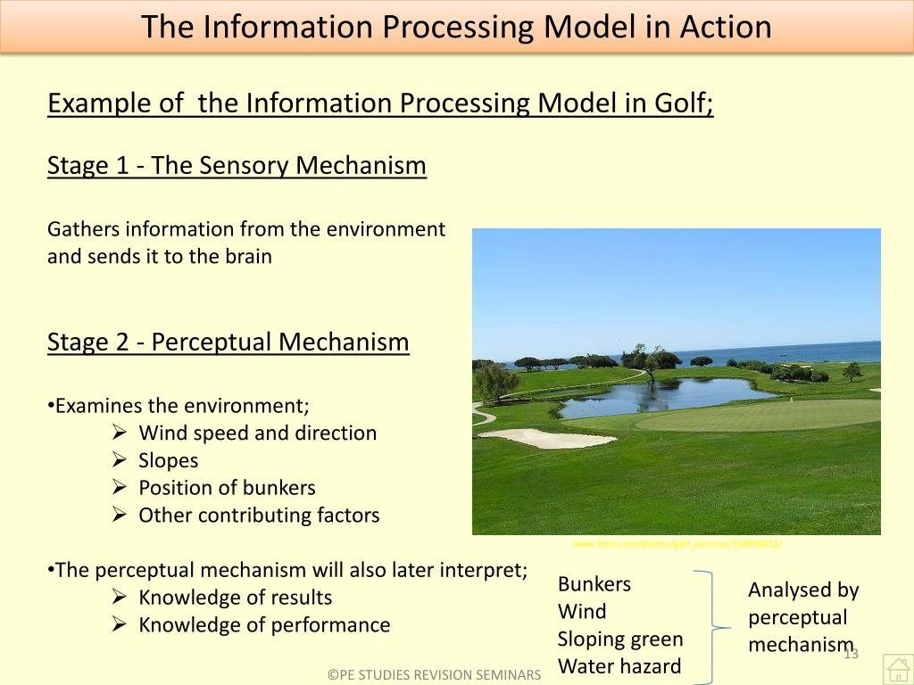 Example of  the Information Processing Model in Golf;