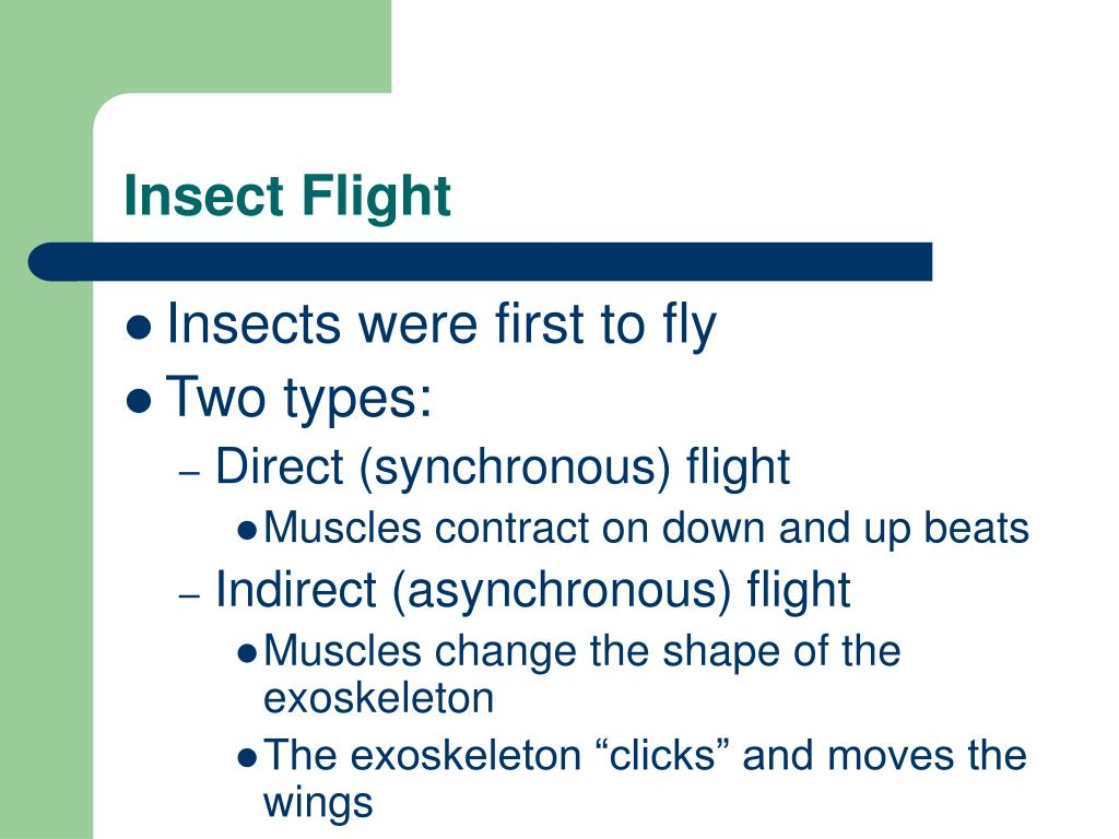 Insect Flight