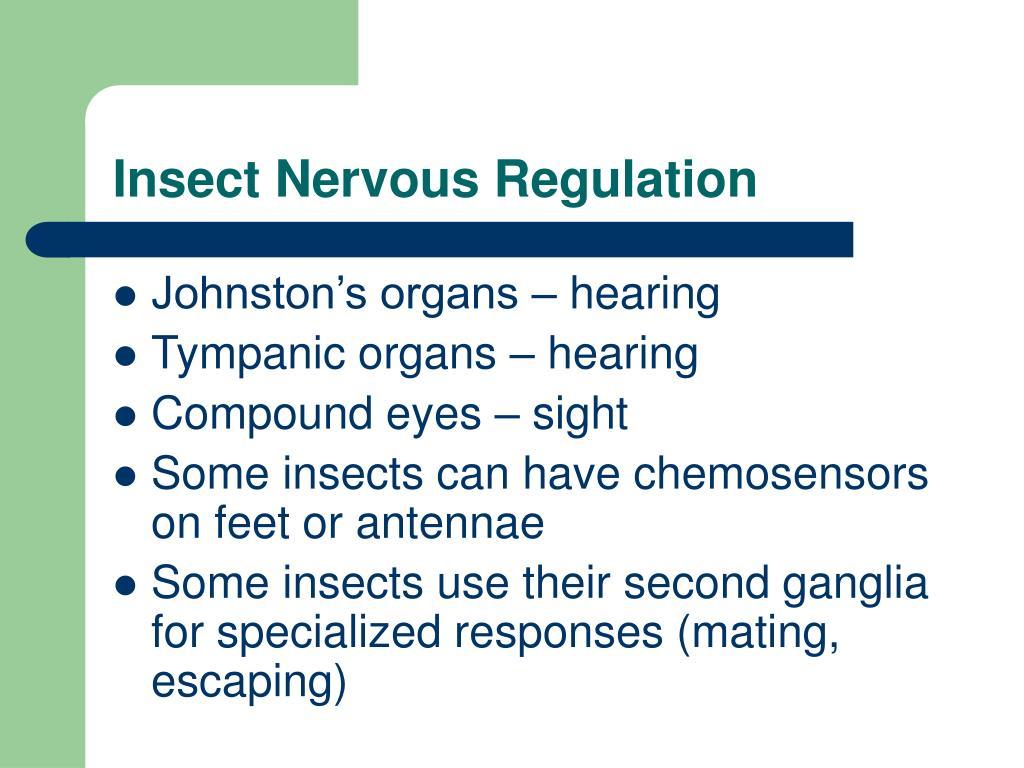 Insect Nervous Regulation