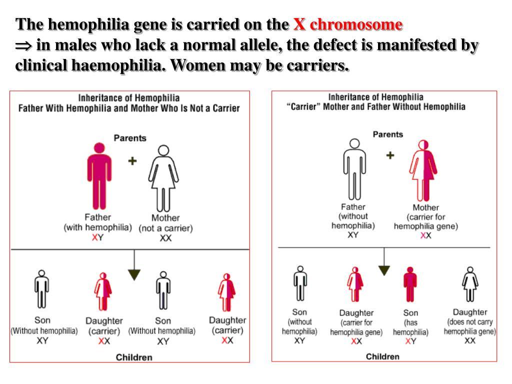 The hemophilia gene is carried on the