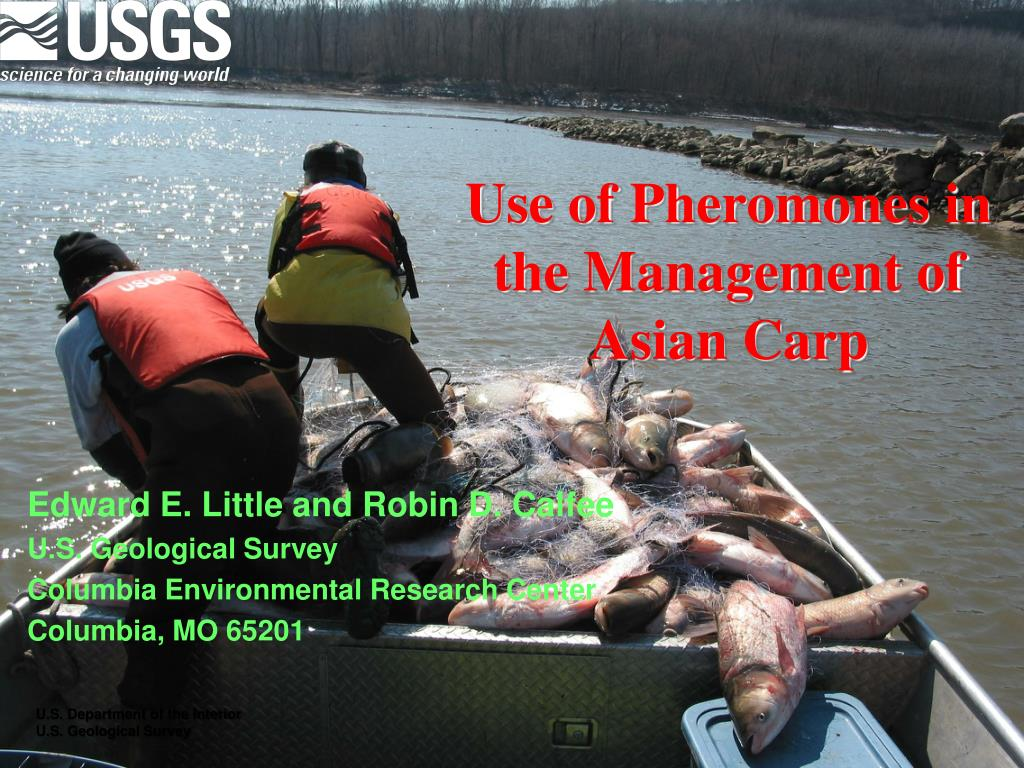 use of pheromones in the management of asian carp l.