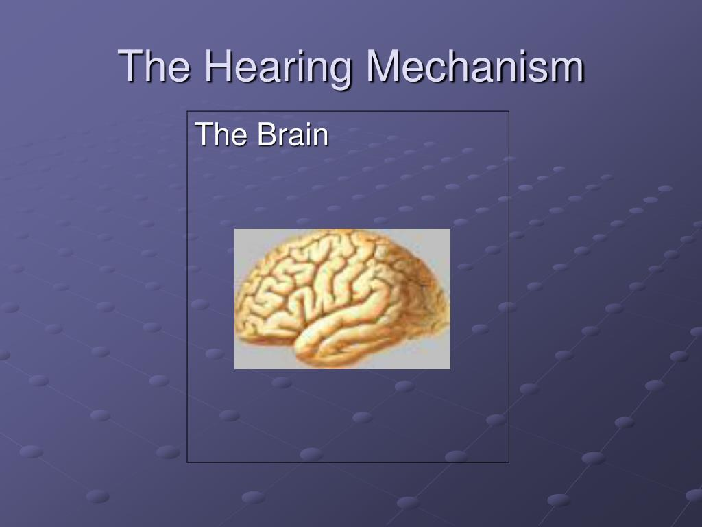 The Hearing Mechanism