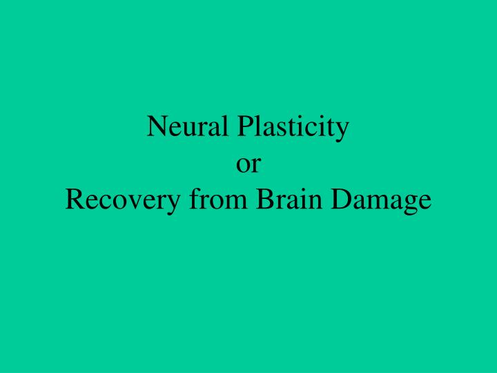 neural plasticity or recovery from brain damage n.