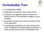 corticobulbar tract