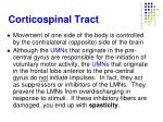 corticospinal tract11