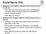 facial nerve vii39