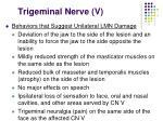 trigeminal nerve v26