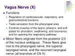 vagus nerve x41