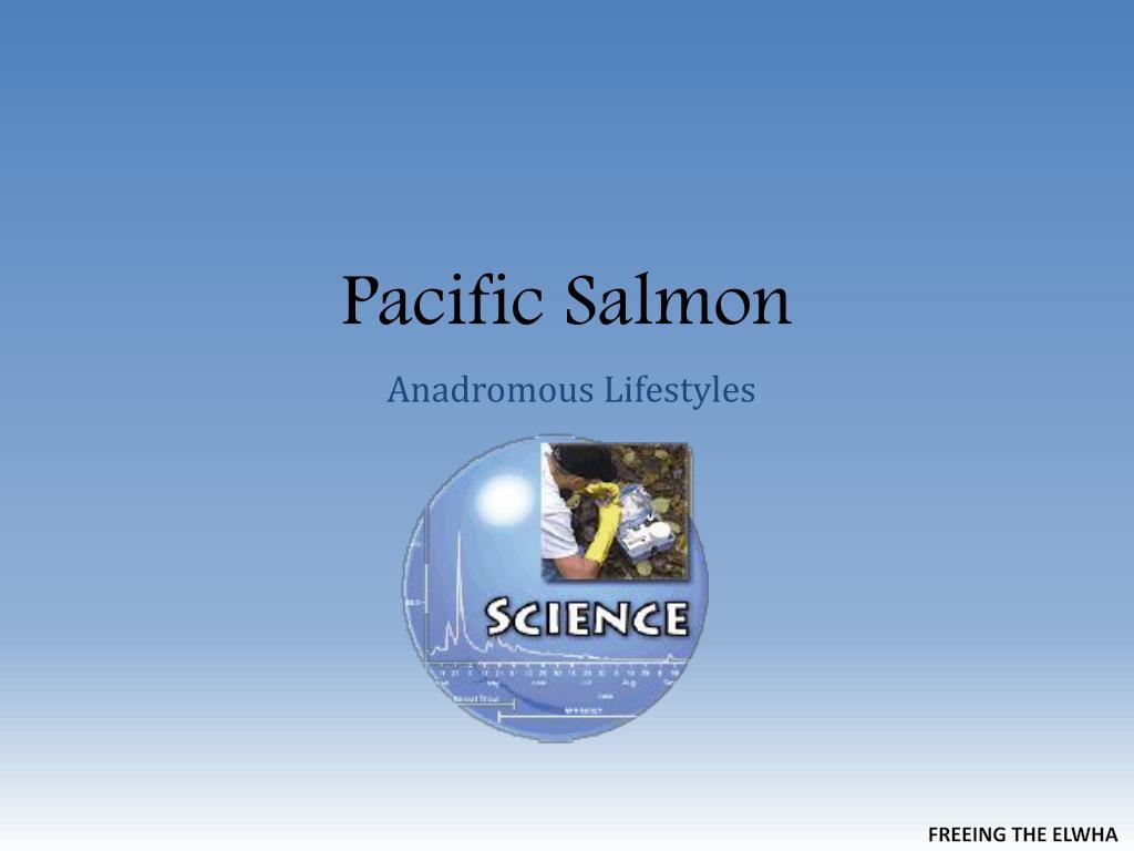 pacific salmon l.