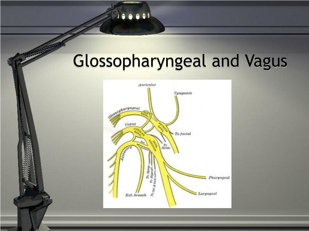 Glossopharyngeal and Vagus