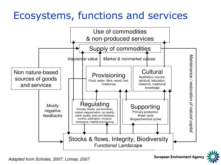 Ecosystems, functions and services