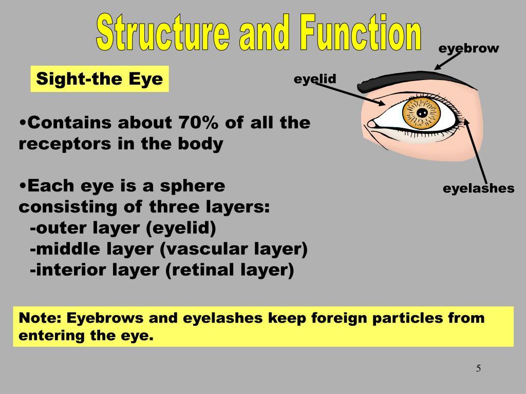Sight-the Eye