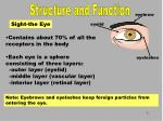 sight the eye
