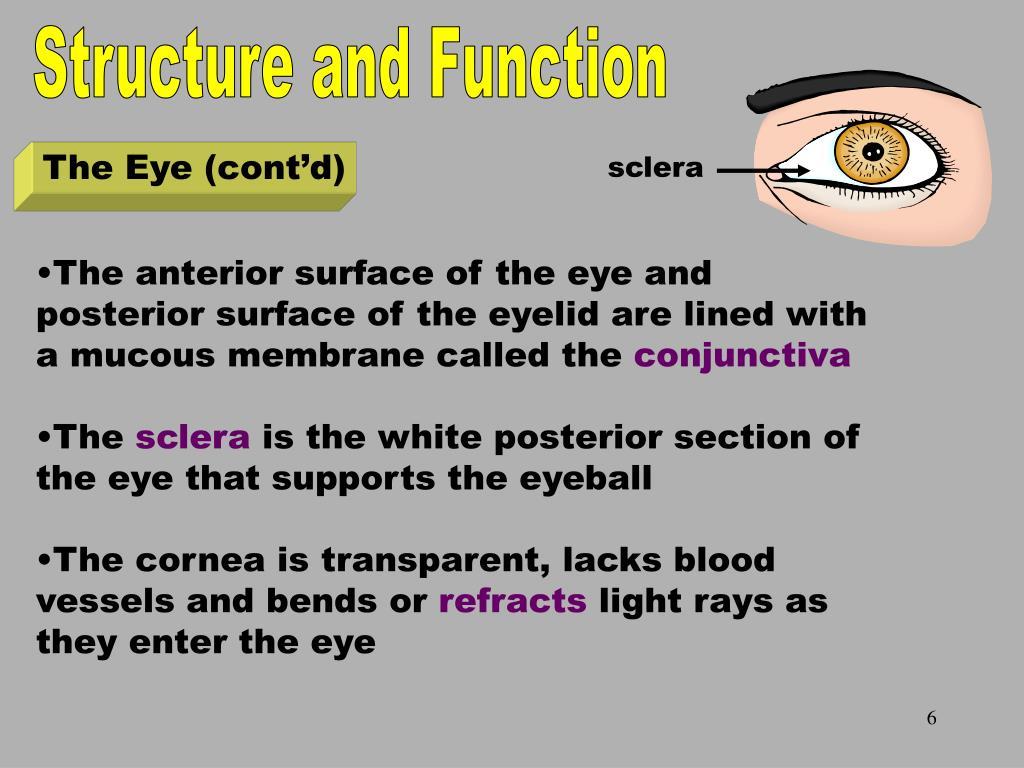 The Eye Part 2