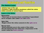 the retinal layer