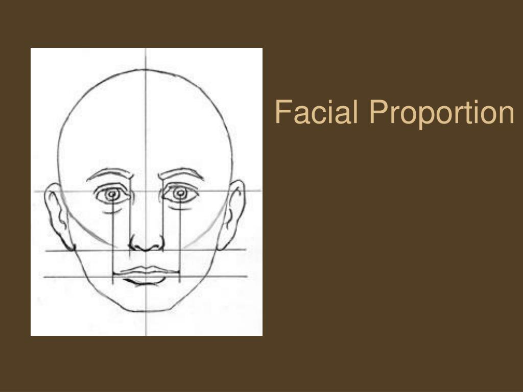 facial proportion l.