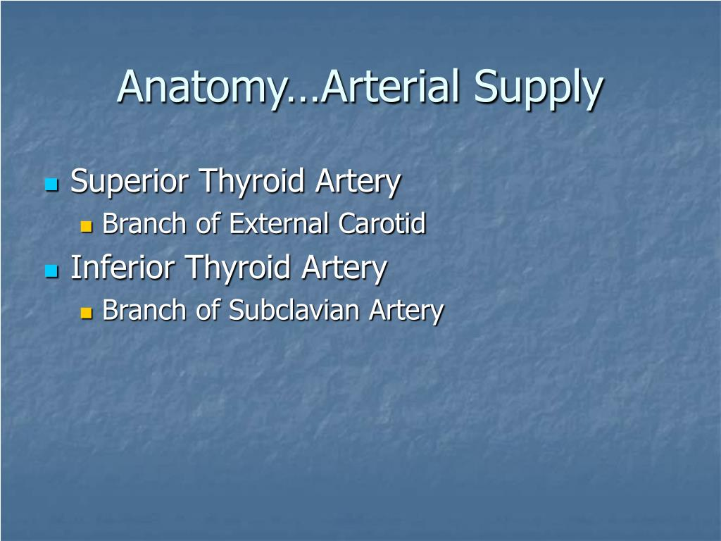 Anatomy…Arterial Supply