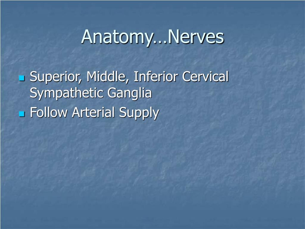 Anatomy…Nerves