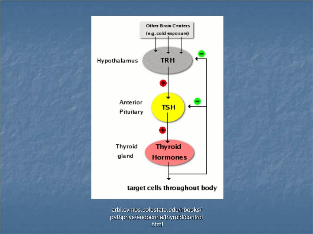 arbl.cvmbs.colostate.edu/hbooks/pathphys/endocrine/thyroid/control.html