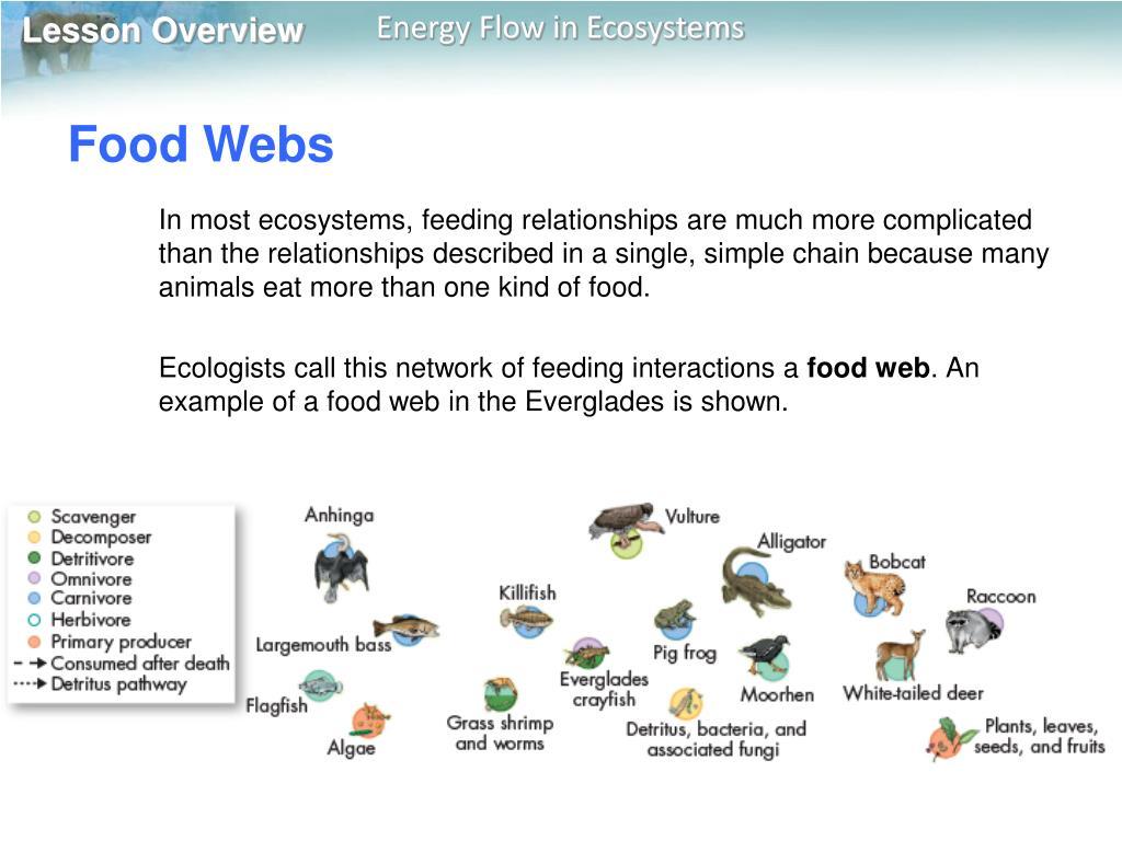 Anhinga Food Chain