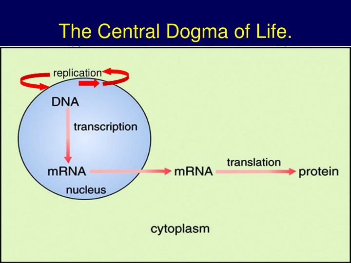 the central dogma of life n.