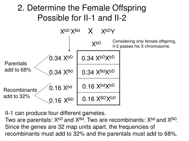 2 determine the female offspring possible for ii 1 and ii 2