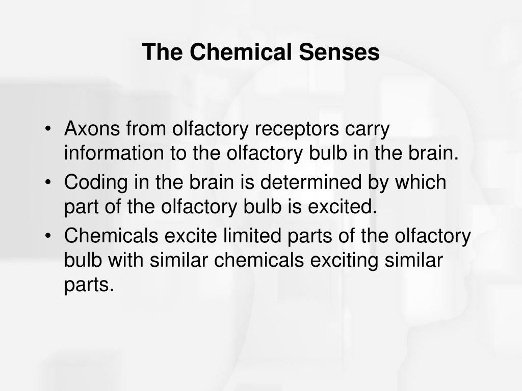 The Chemical Senses