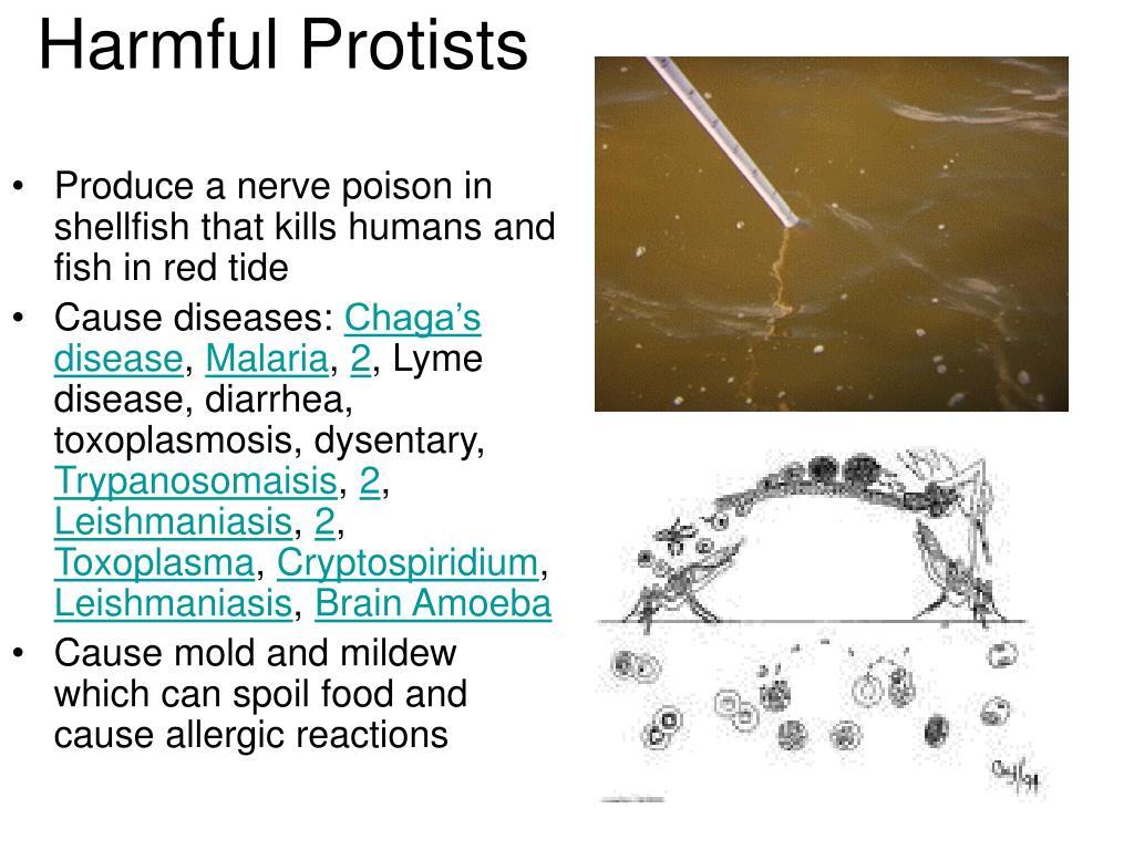 Harmful Protists