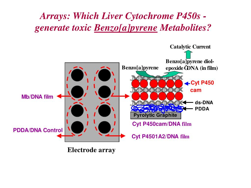 Arrays: Which Liver Cytochrome P450s -generate toxic