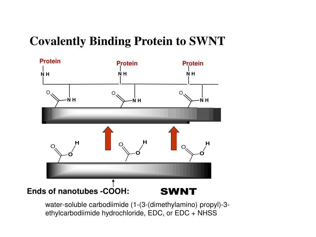 Covalently Binding Protein to SWNT
