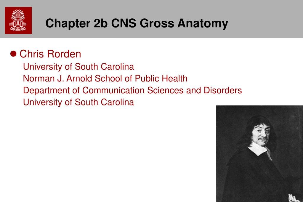 chapter 2b cns gross anatomy l.