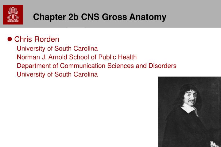 Chapter 2b cns gross anatomy