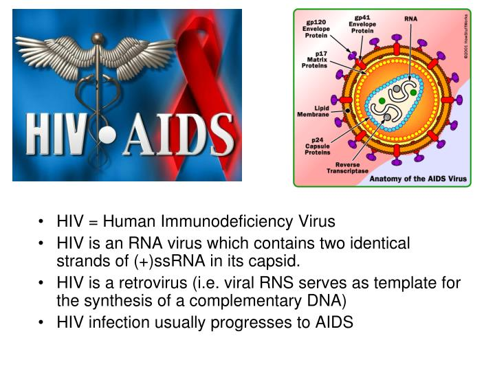 PPT - HIV = Human Immunodeficiency Virus HIV is an RNA virus which ...