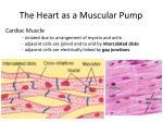 the heart as a muscular pump