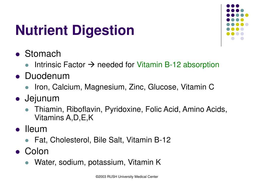Nutrient Digestion
