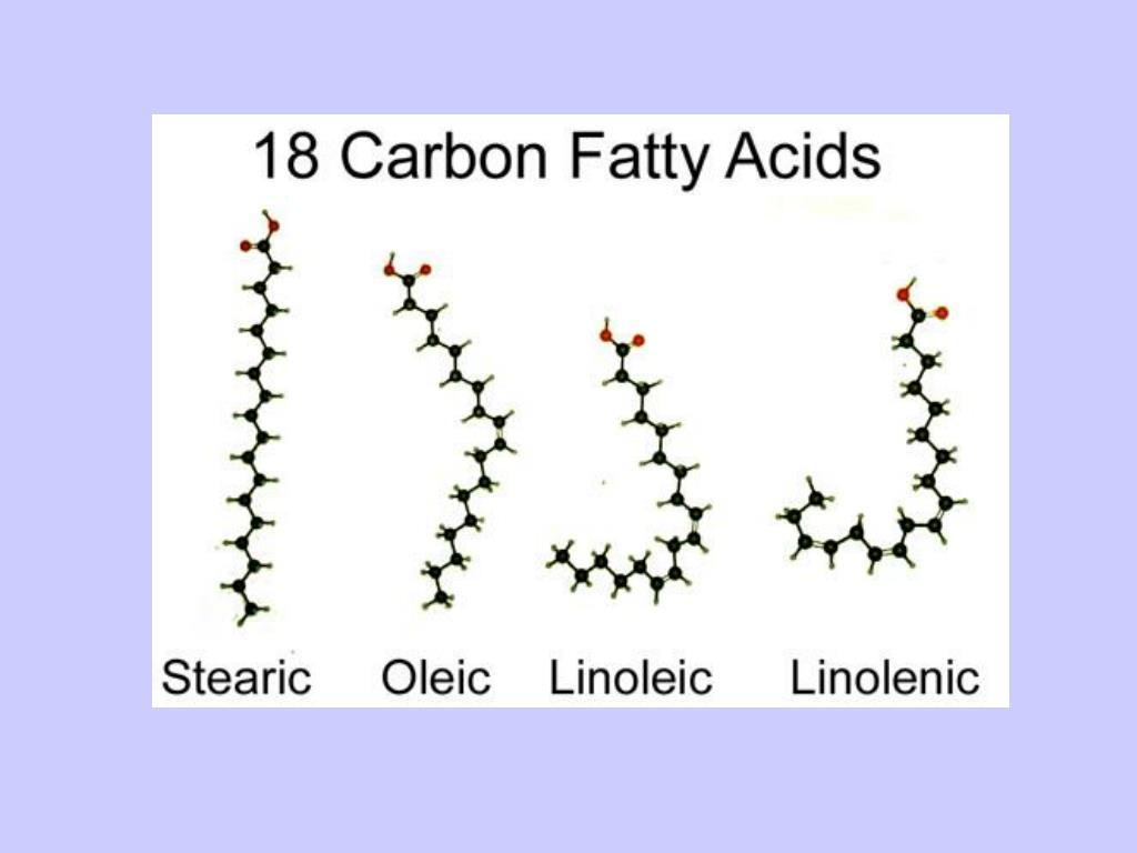 18-Carbon Fatty Acids