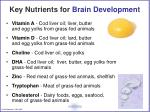 key nutrients for brain development