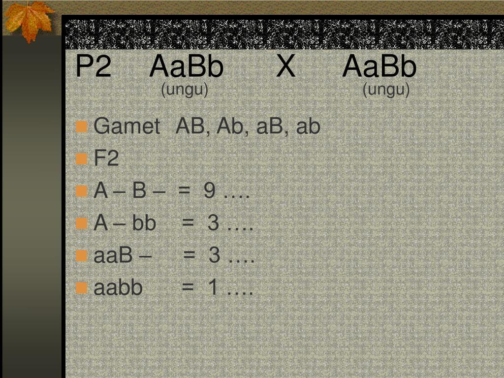 P2   AaBb      X  AaBb