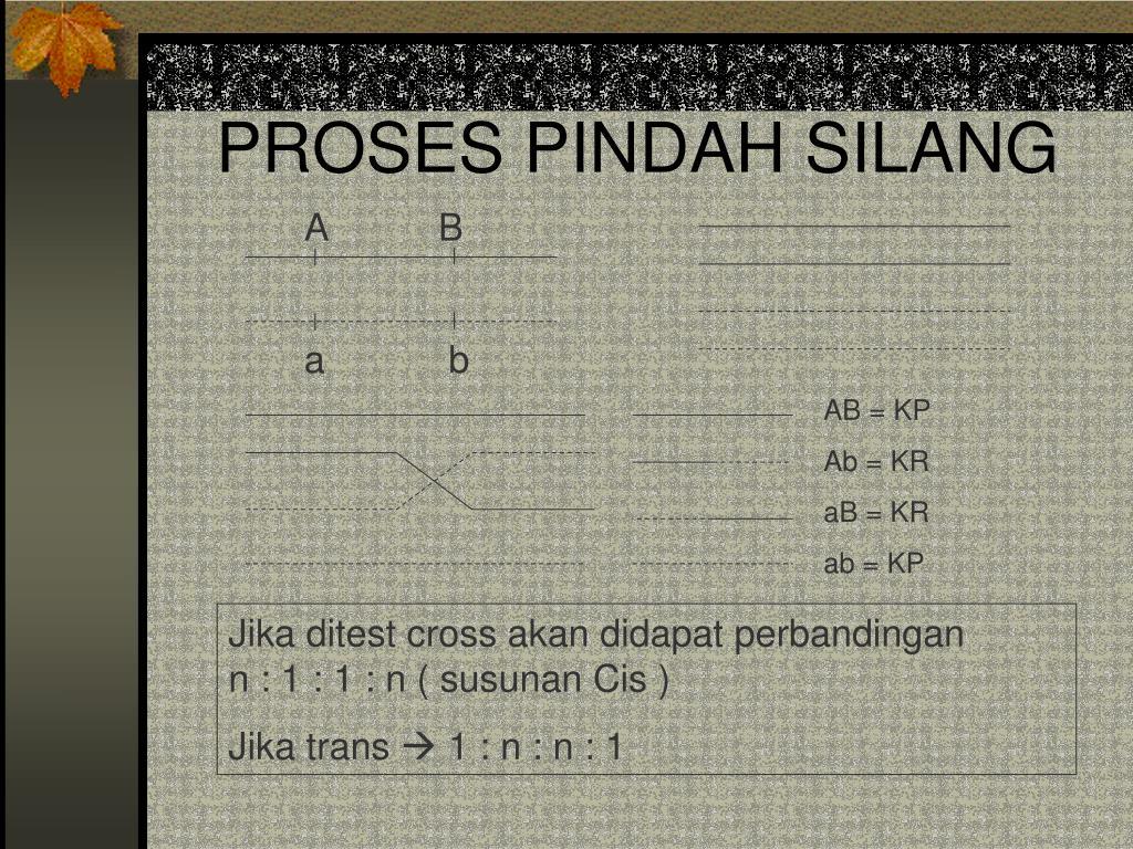 PROSES PINDAH SILANG