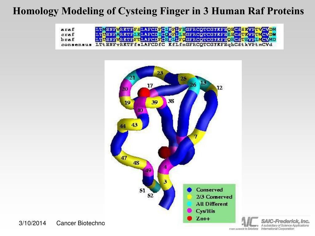 Homology Modeling of Cysteing Finger in 3 Human Raf Proteins