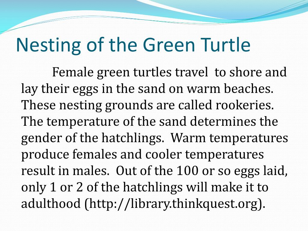 Nesting of the Green Turtle