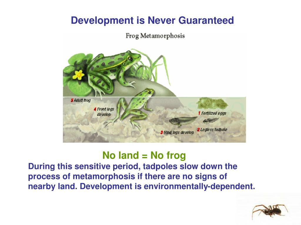 Development is Never Guaranteed