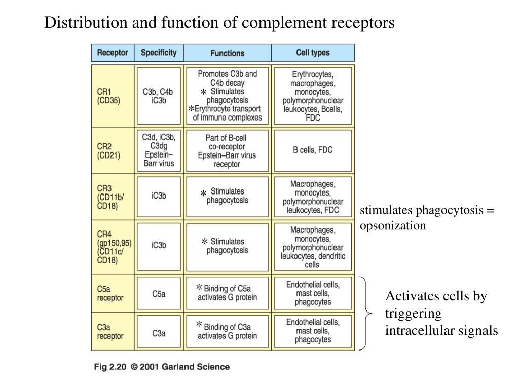 Distribution and function of complement receptors