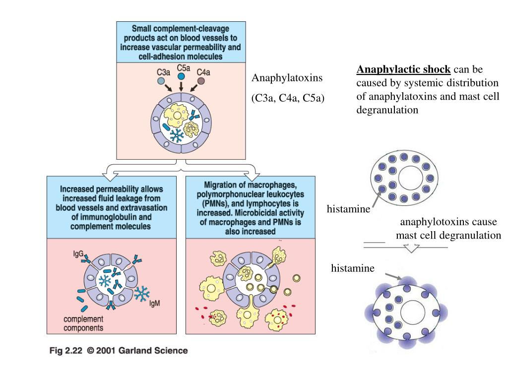 Anaphylatoxins