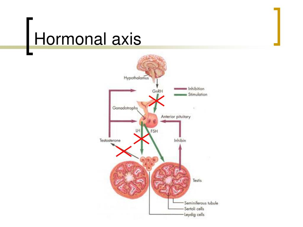 Hormonal axis