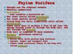 phylum porifera2