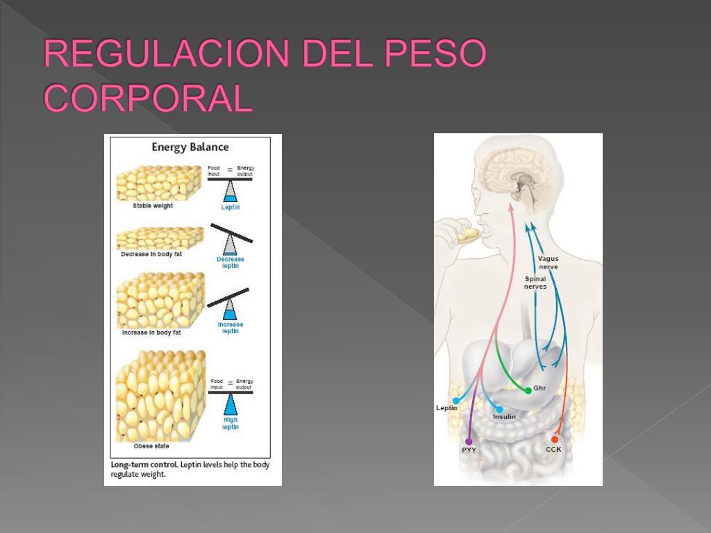 REGULACION DEL PESO CORPORAL