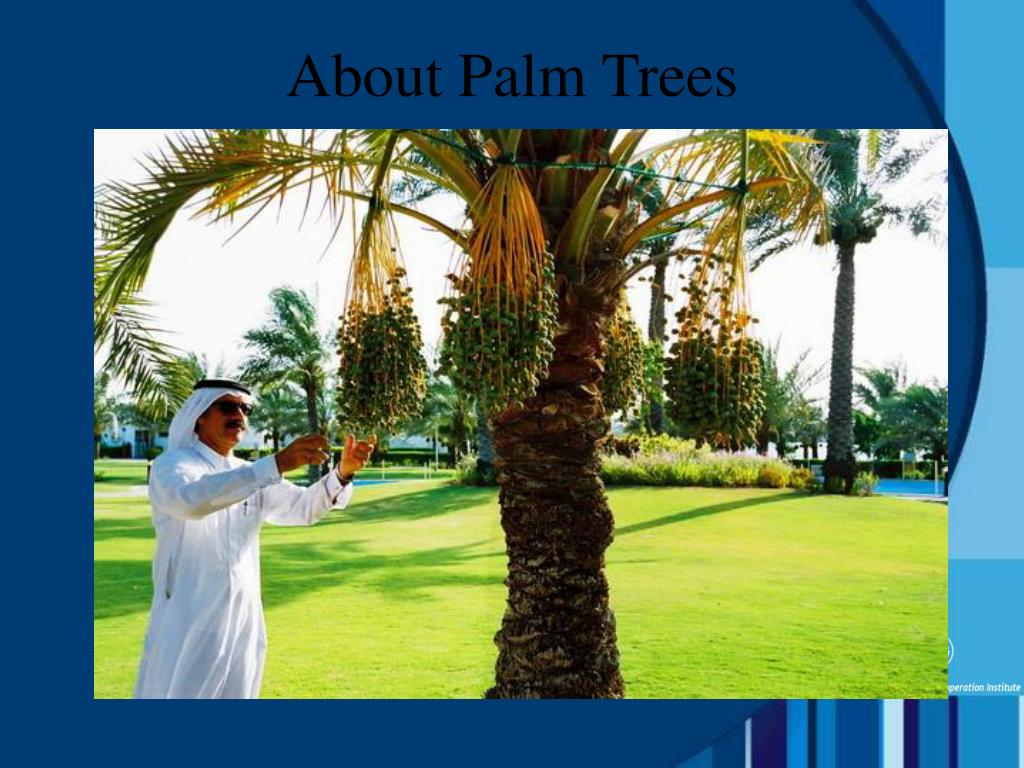 About Palm Trees
